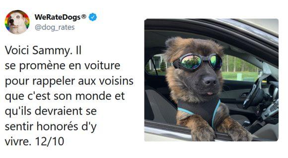 Image de couverture de l'article : Vous lui envoyez la photo de votre chien, ce compte la commente et la note