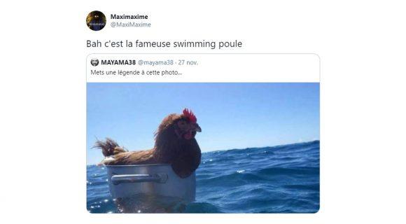Image de couverture de l'article : Quand Twitter légende une poule dans une marmite dans l'océan.