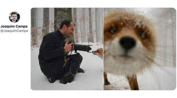 Image de couverture de l'article : Thread : quand les animaux interrompent les photographes naturalistes
